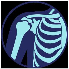 Blue and teal shoulder bones on transparent background